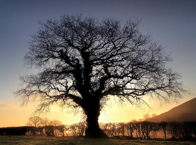 Moi przodkowie – drzewo genealogiczne