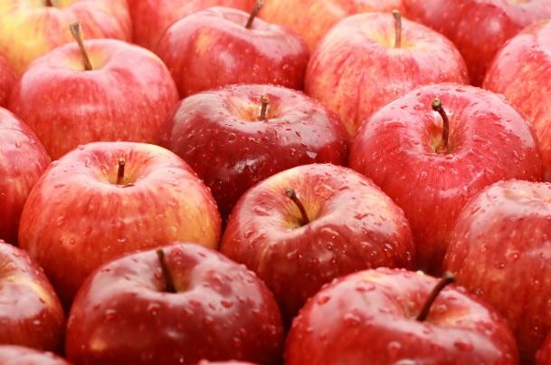 Sad z jabłkami – owocowy biznes