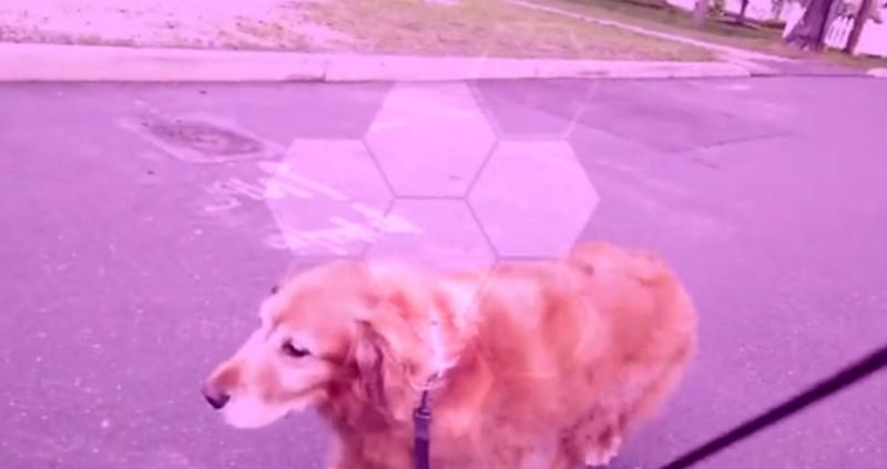 pies prowadzony przez drona