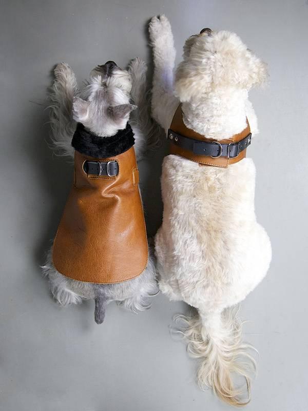 ocieplacz skorzany dla psa