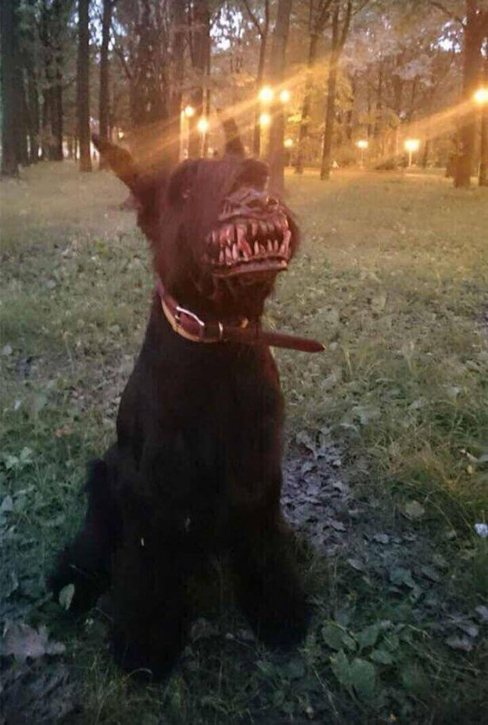 pies jak wilkołak